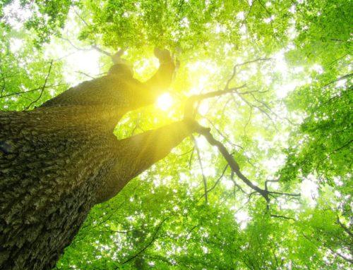 Energie rinnovabili, nuovi Bandi MISE ai nastri di partenza